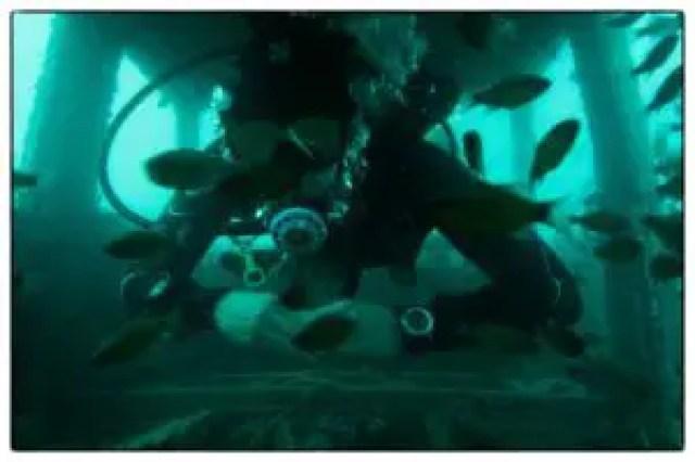 Diving in Puducherry
