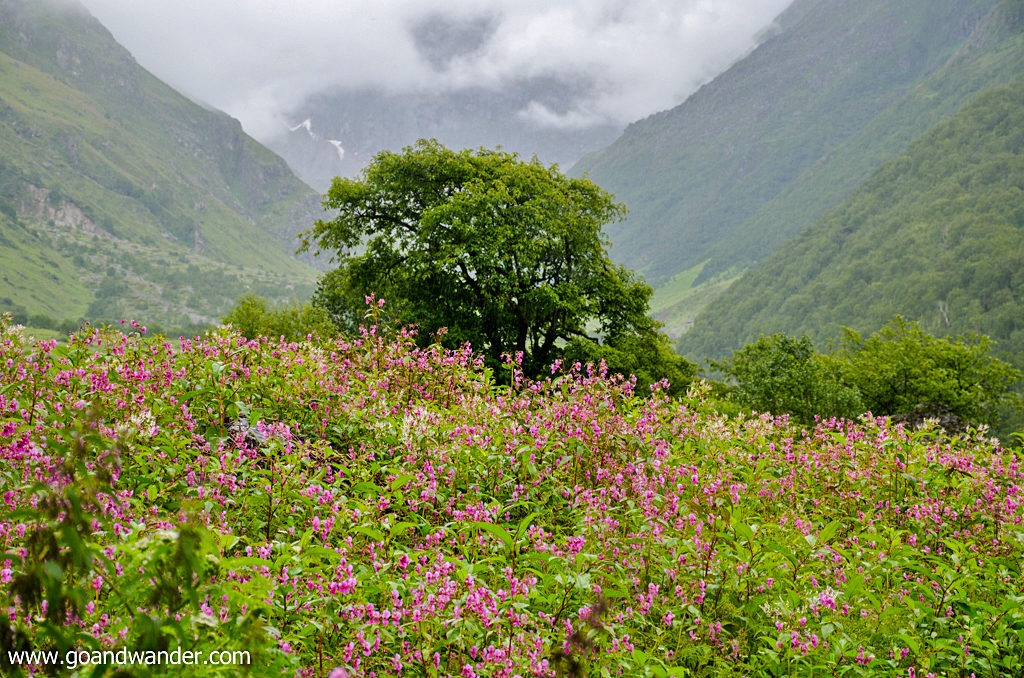 Valley of Flowers trek in the Himalayas