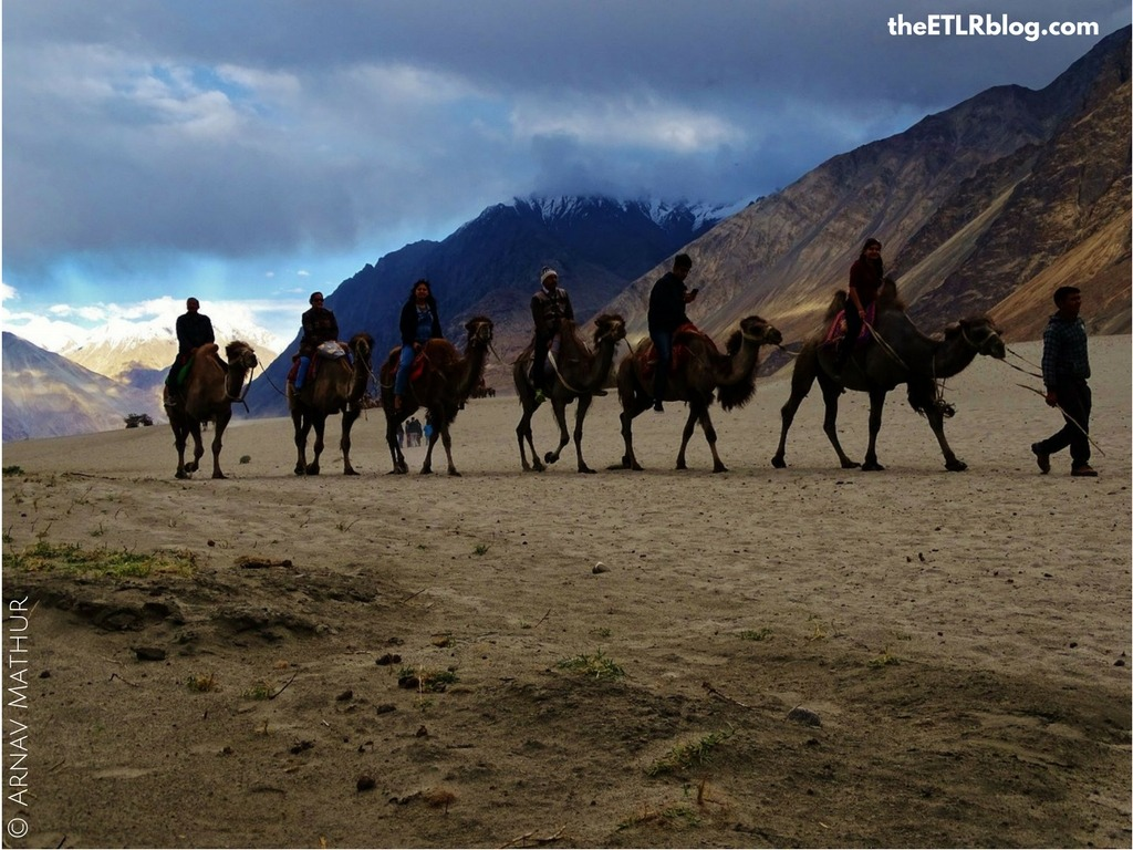Photo Journey to Leh - Ladakh - Double Humped Camels