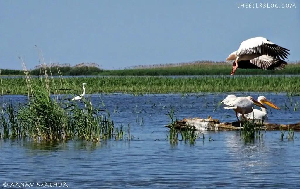 Danube Delta ExperienceRomania Birdwatching