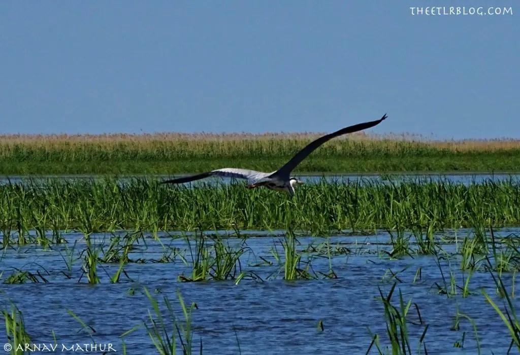 Danube Delta birding theETLRblog