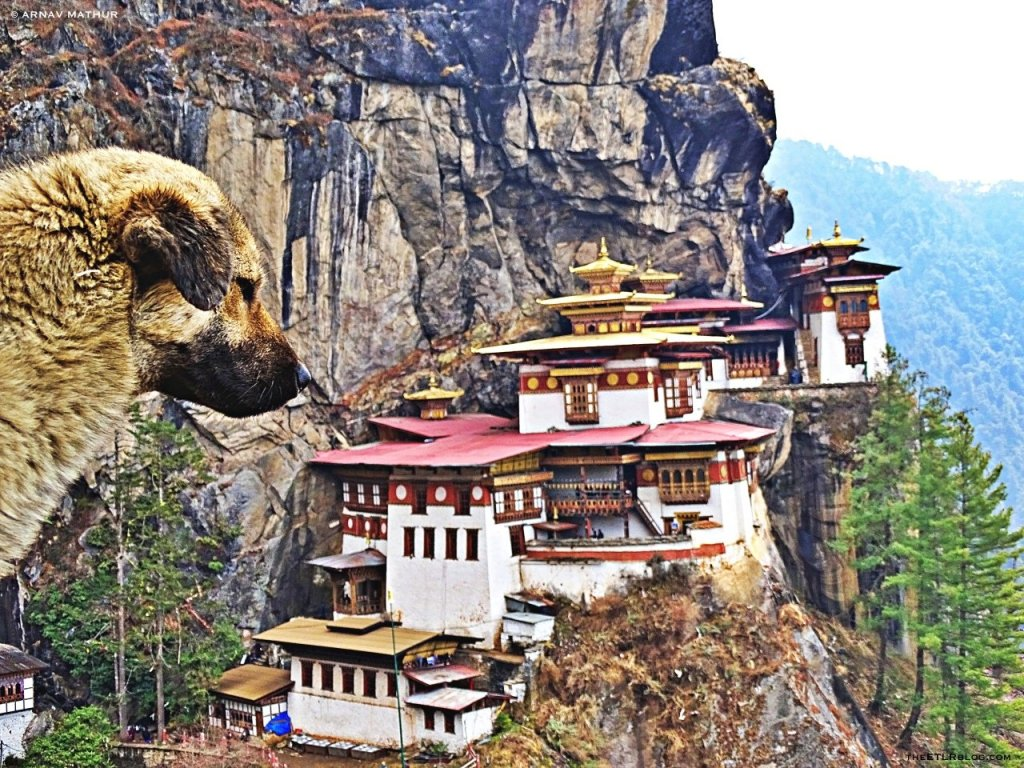 Tigers Nest Top Things To Do In Bhutan | Eat Travel Live Repeat