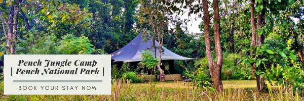 Pench Jungle Camp | Property Review | theETLRblog