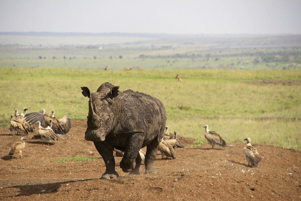 Highlight of Nairobi Travel Itinerary - Safari