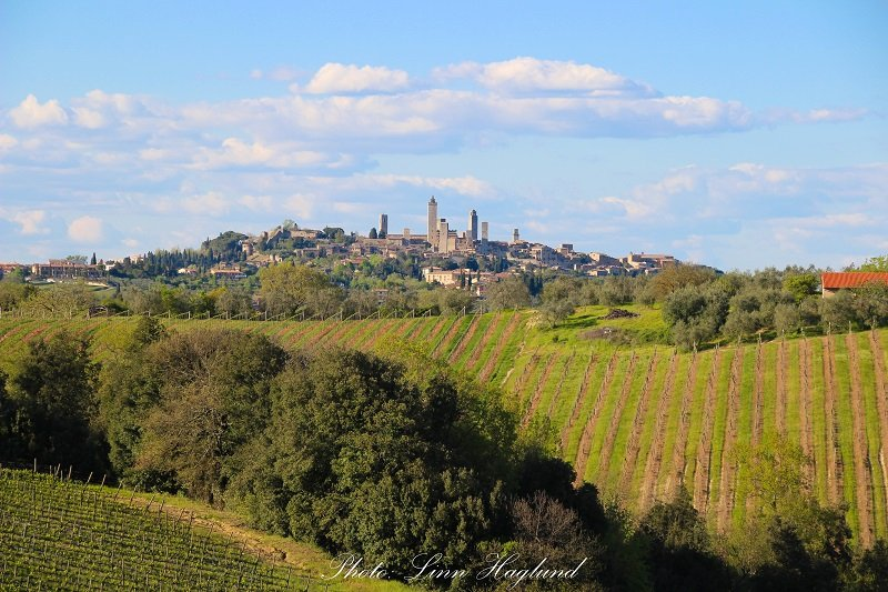 The beautiful vineyards in Tuscany