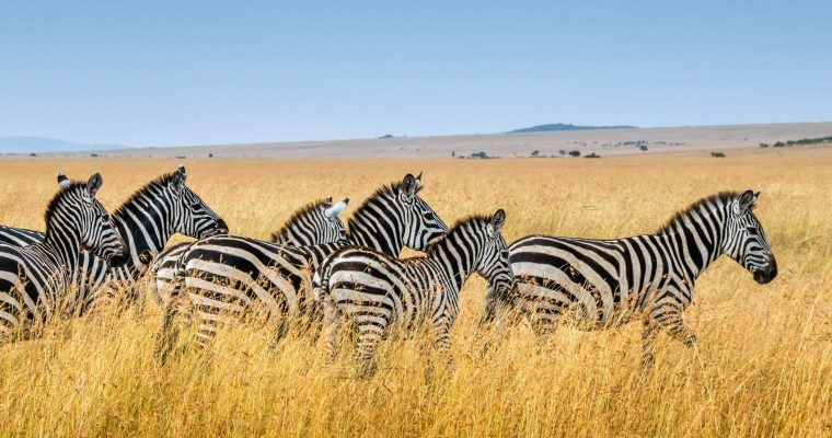 The Best Location For Your First Safari Experience in Botswana | Africa