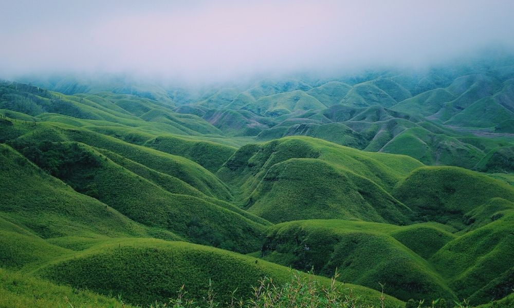 A Travel Guide to Dzukou Valley Trek – A World of Wildflowers and Picture Perfect Landscapes