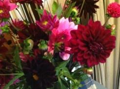 mooie kleuren dahlia's