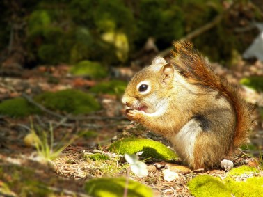 August, Red Squirrel