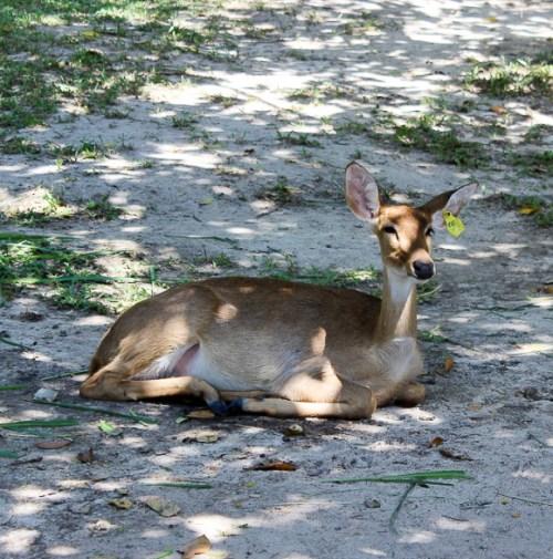 deer | www.theeverykitchen.com