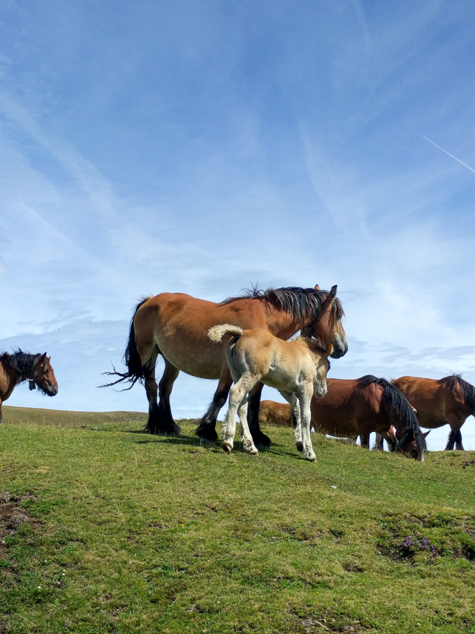 Horses in The Pyrenees, Spain | theeverykitchen.com