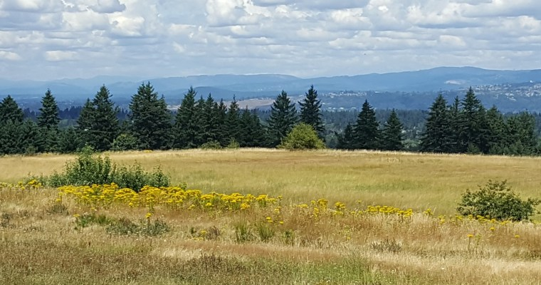 Nature Walk: Powell Butte, a gem in Portland