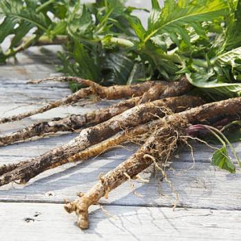 Burdock Root - herbal support for healthy liver