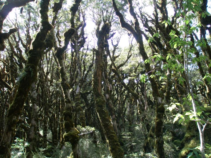 A beech forest, kind of eerie