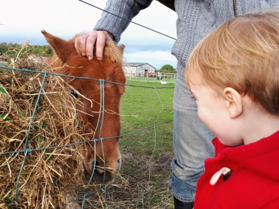 expat day out on a farm photo