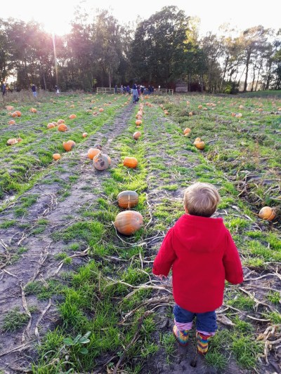 expat day out on a farm- pumpkin hunting photo