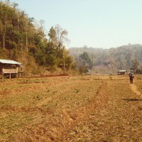 Part 2: The Noob's Motorcycle Diaries - Mae Hong Son Loop