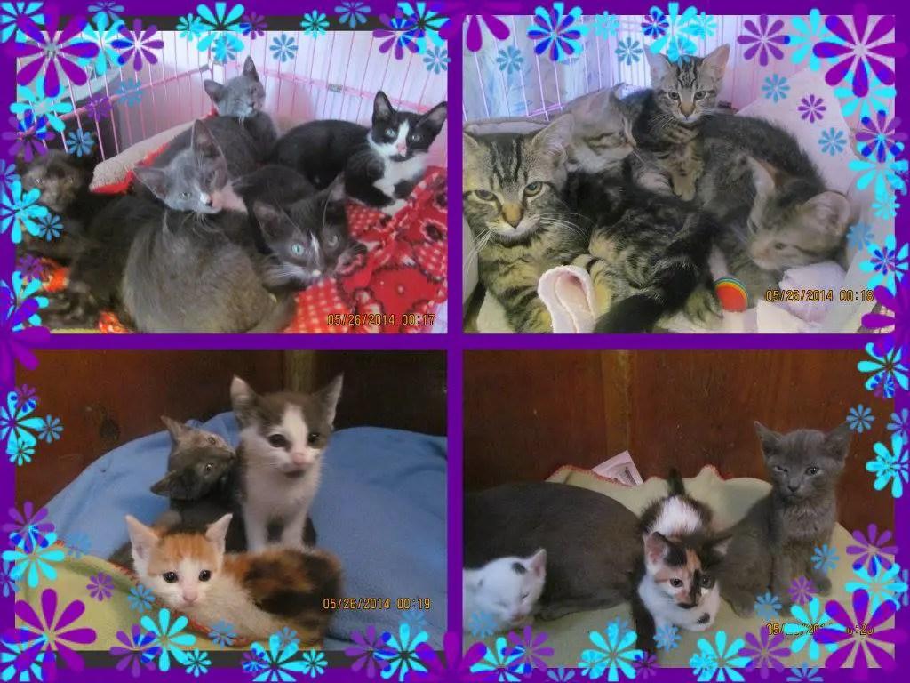 kittens02o