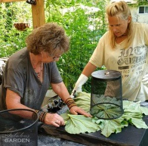 two women lay out leaves for cement planter