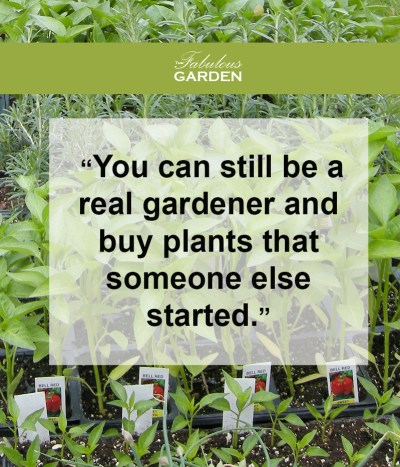 you can still be a real gardener and buy plants that someone else started