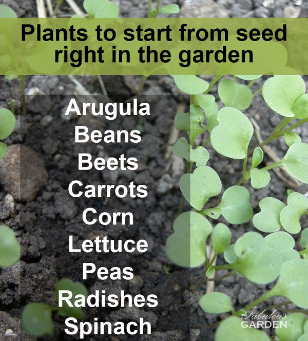 list of seeds to start directly in the garden