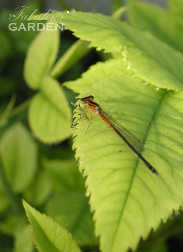 dragonfly on bright green leaf