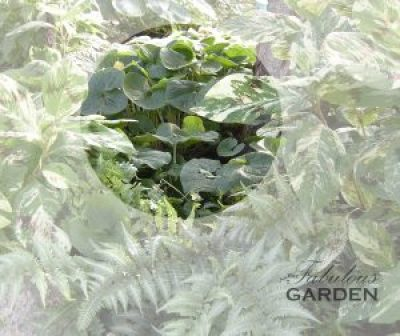 wild ginger highlighted in circle