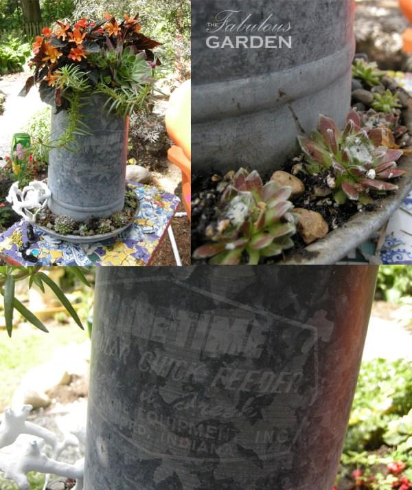 plants in old chicken feeder