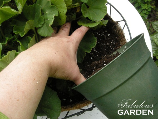pouring soil into a pot