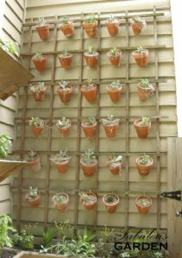 Wall of succulents in individual pots