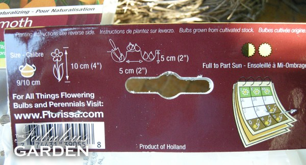 There is lots of growing information on the back of the bulb package
