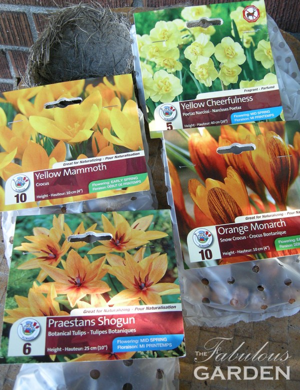 Assorted spring blooming bulbs in their packages