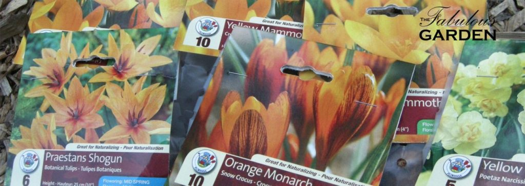 Assorted packages of spring blooming bulbs