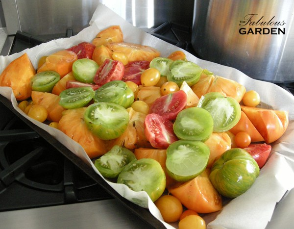 Loosely chopped heirloom tomatoes on a pan, waiting to go in the oven