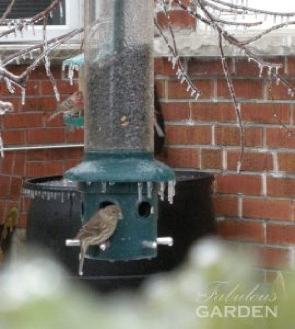 After an ice storm a birdfeeder provides much needed food