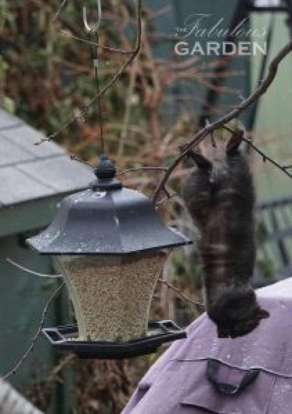 Squirrels will go to great lengths to get at bird seed