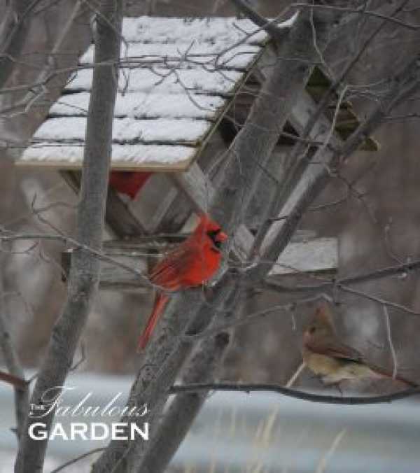 Male and female cardinals at a birdfeeder