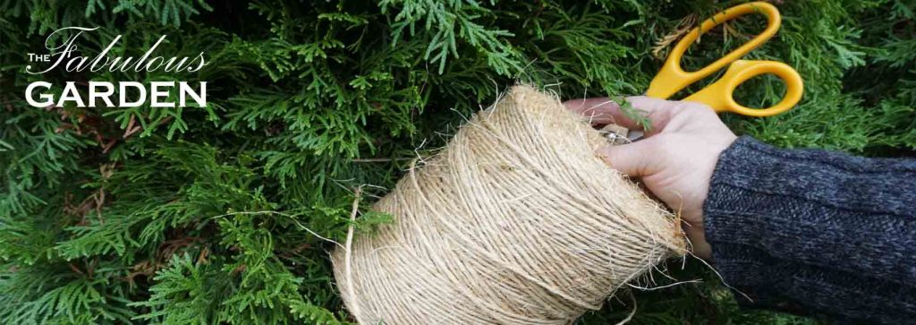 Prevent snow and ice damage to cedars without turning them into burlap mummies