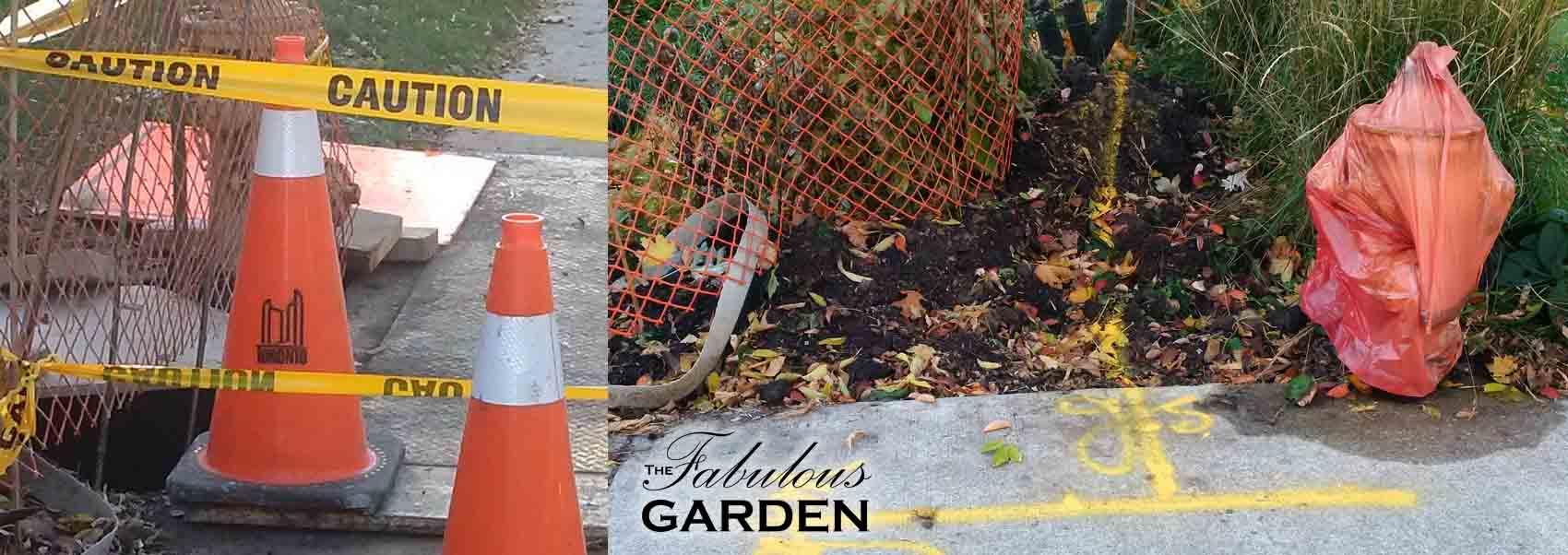 A city gardener's nightmare