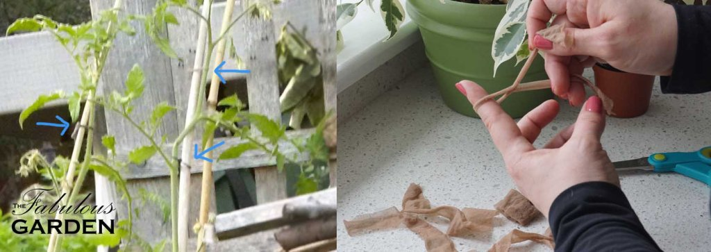 How to make perfect thrifty plant ties