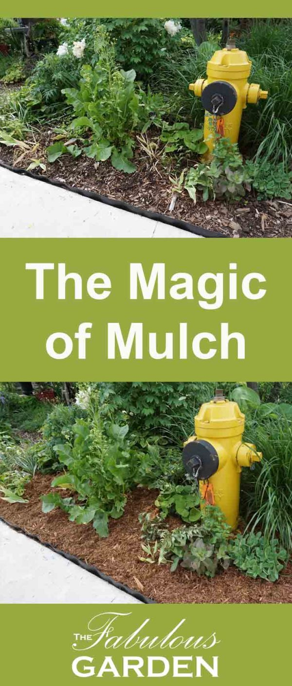 The magic of mulch