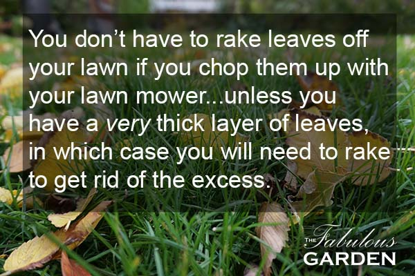 Do you really need to rake the leaves off your lawn? Find out...