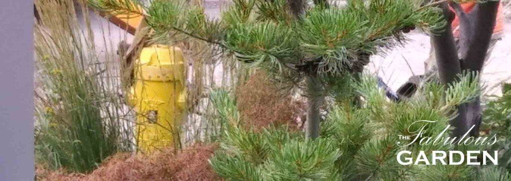 Another Fire Hydrant Story--Drama in Jennifer's Garden