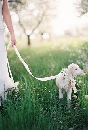 pets-in-weddings-weber-photography-via-brides