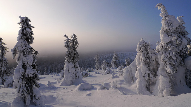 Holiday in Lapland