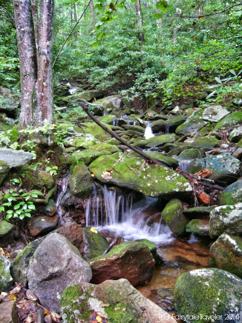 Pisgah National Forest 1