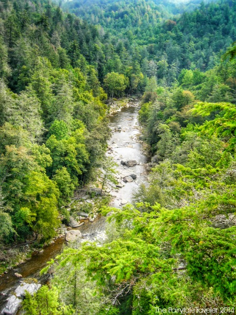 Pisgah National Forest 8