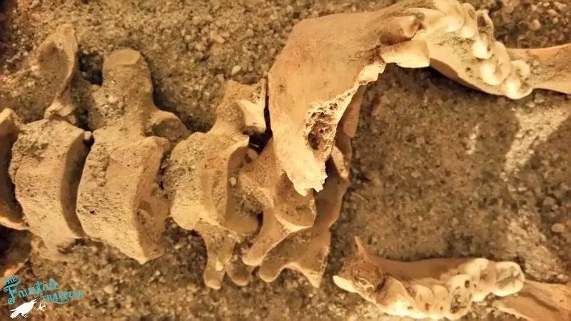 Nidaros Cathedral Crypt