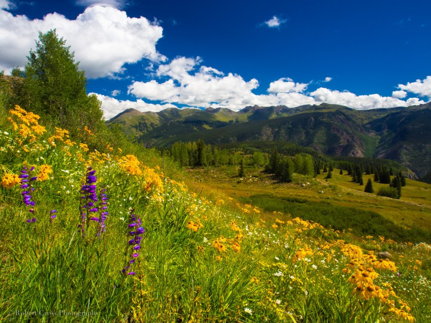 Colorado marijuana legalization weed tourism Colorful wildflowers, green fields, white clouds, and blue skies at Molas Pass (el. 10,910 ft./3325 m.) in the San Juan Mountains of southwest Colorado.