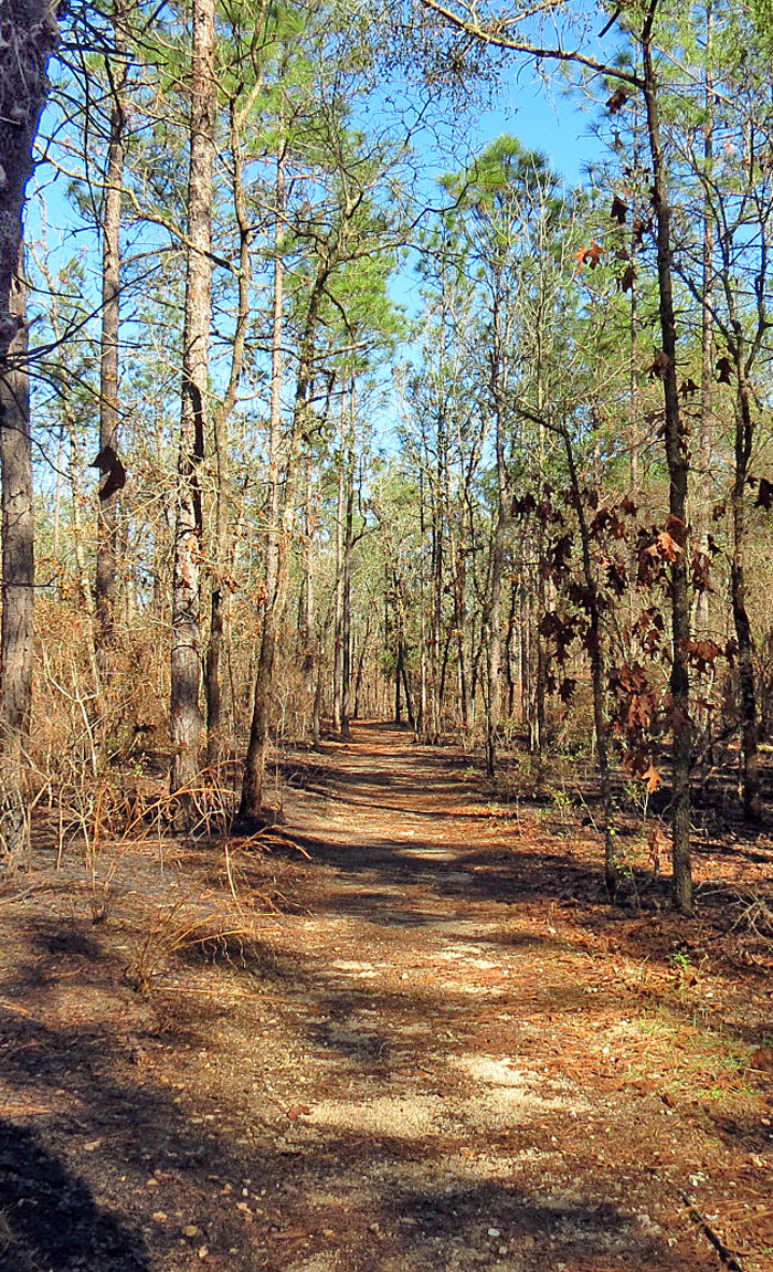 Native American Heritage, Tallahassee, Travel Guide, Apalachee, Leon Sinks Trail